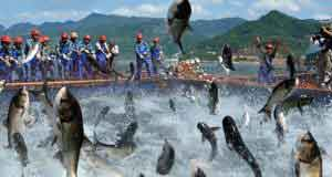 Cá nhảy khỏi lưới
